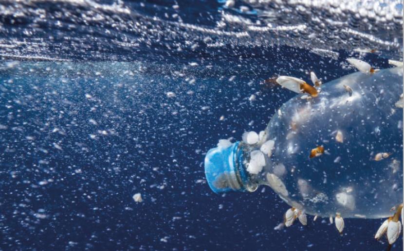 Microplastiques polluent les fonds marins